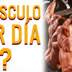 ¿Cuál es la razón de entrenar un músculo al día?
