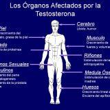 6 Síntomas de tener la testosterona baja