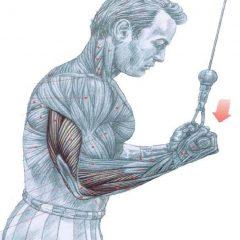 Puntos débiles de los tríceps