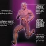Cómo recuperar el eje por el uso de anabolizantes