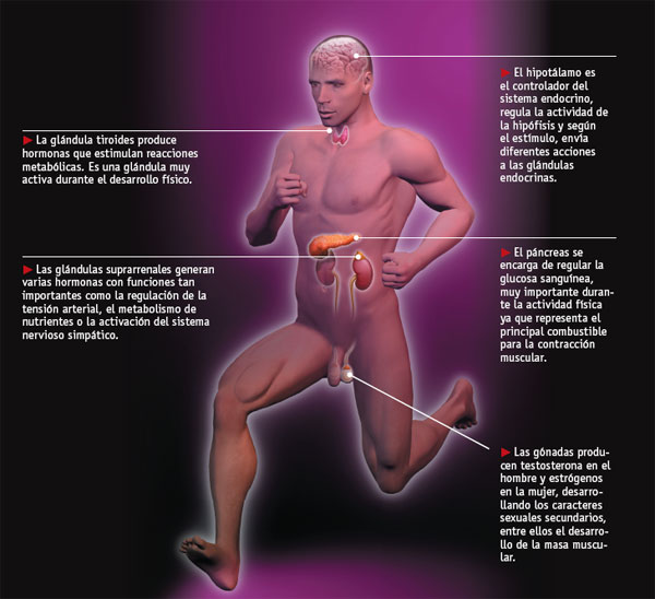 Inyectarse testosterona antes o despues de entrenar