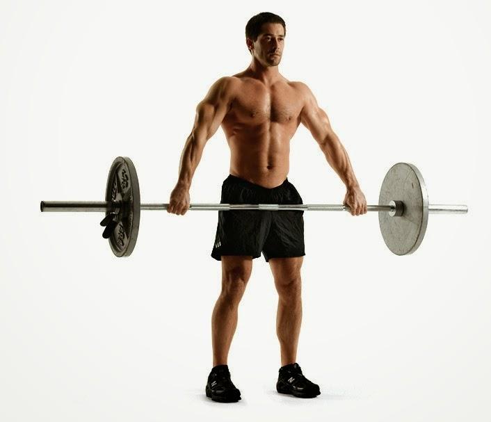Relacion entre flexibilidad elasticidad y fuerza muscular