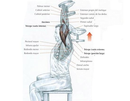 Ejercicios de tríceps con mancuernas