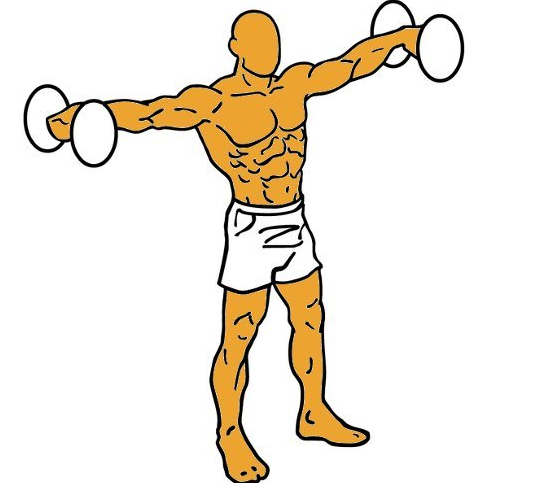 4 Ejercicios para hombros con mancuernas, barras y polea