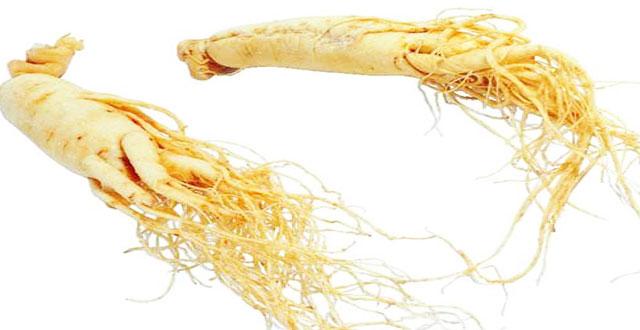 Ginseng: beneficios para la salud
