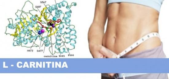 L carnitina: ¿para qué sirve en el embarazo?