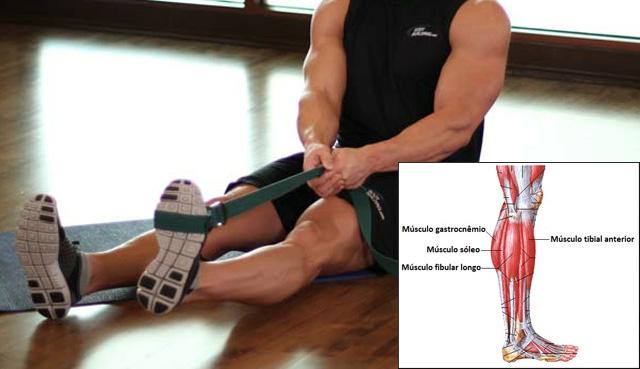 Músculo tibial anterior