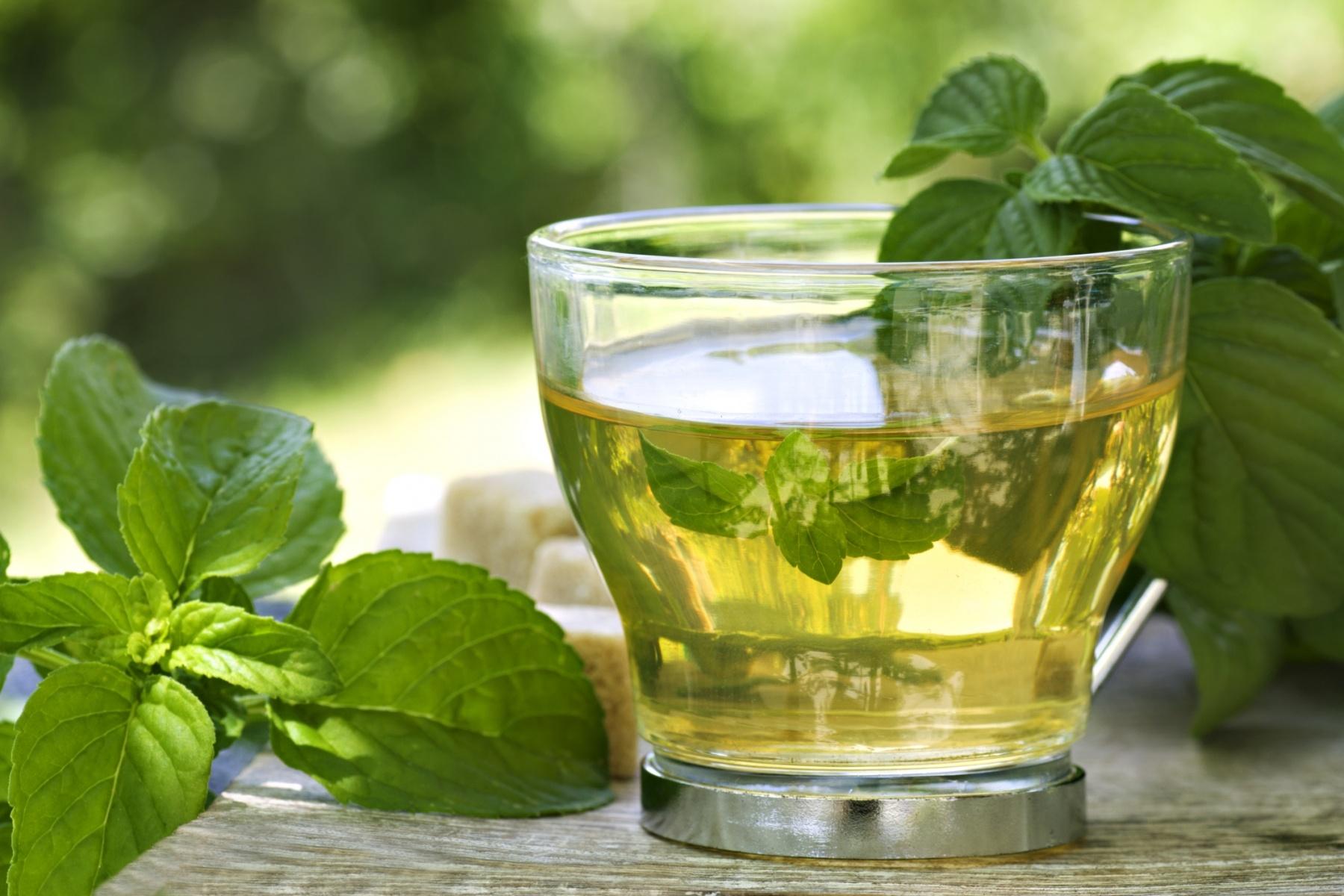 Té verde: ¿para qué sirve como planta medicinal?