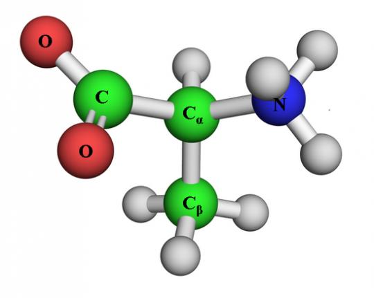 Aminoacidos no esenciales en el organismo