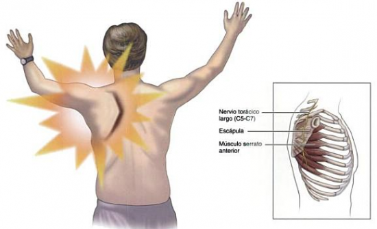 funcion principal del musculo serrato anterior