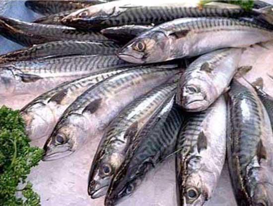 Pescados azules: lista de variedades