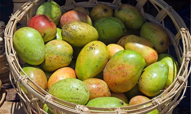Propiedades mango africano