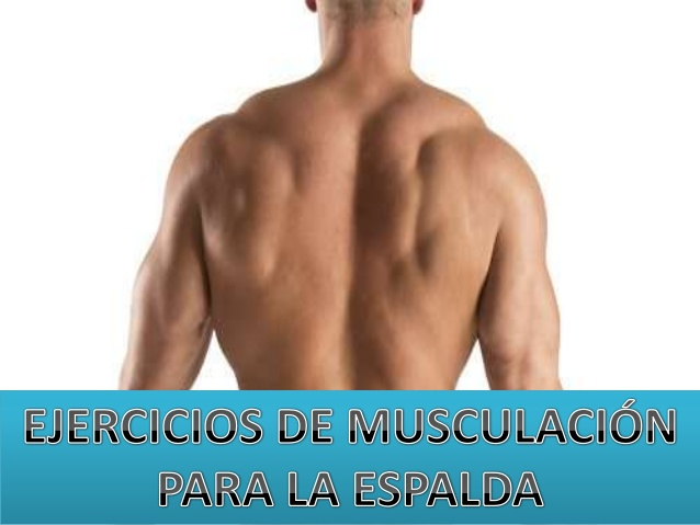 3 Ejercicios para la musculación espalda