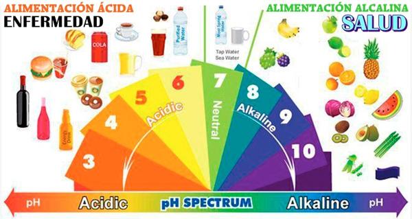 Alimentos alcalinos y sus beneficios