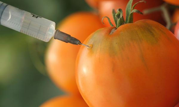 Alimentos transgénicos: ventajas y desventajas