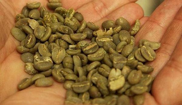Café verde: propiedades y beneficios