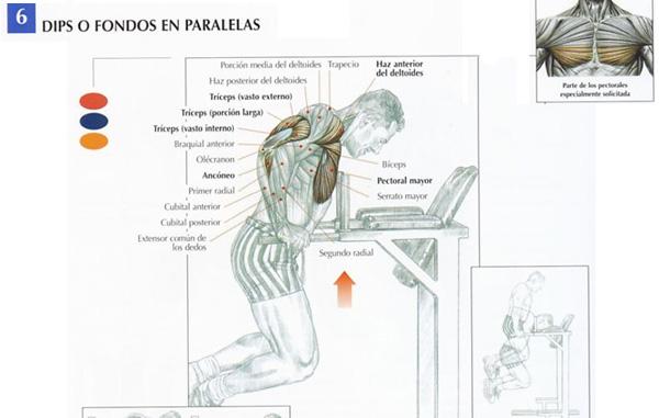 4 excelentes ejercicios pecho