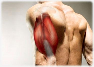 Ejercicios de bíceps y tríceps.