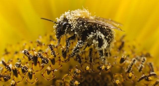 Beneficios del polen de abeja para la salud