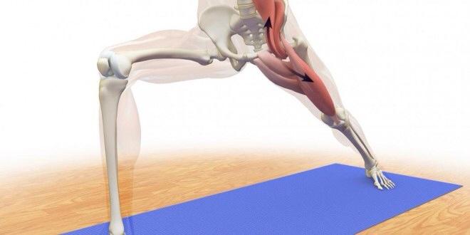 Ejercicios para estirar el psoas: un músculo complejo