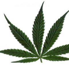 Efectos de la marihuana en el deporte