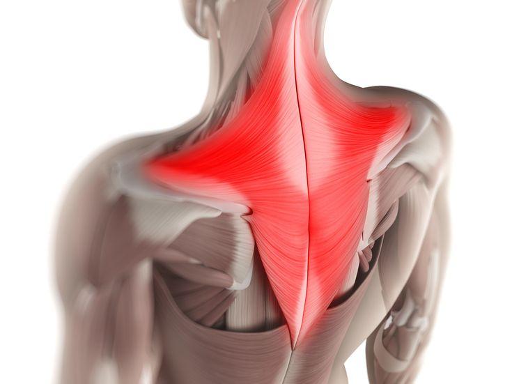 músculos trapecios