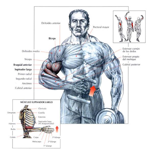 Curl martillo de bíceps cruzado