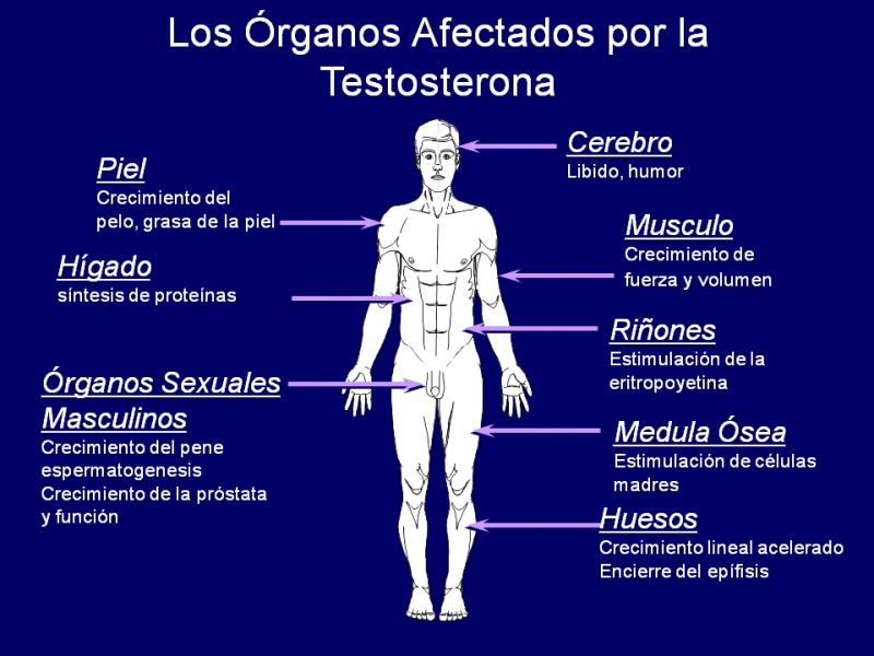 Síntomas de tener la testosterona baja