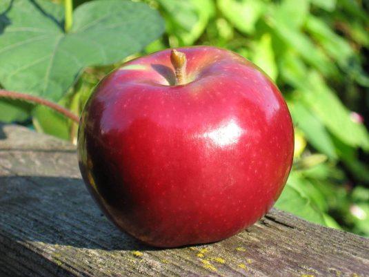 manzana-macintosh